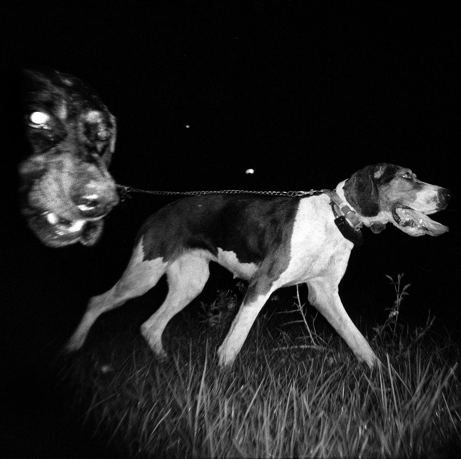 thibodeaux_coons_hunting_dogs_night_dark_woods_forest_south_rural_texas_sport_004.JPG